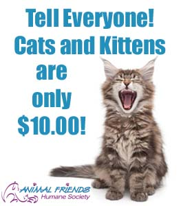 $10 cat adoptions edit